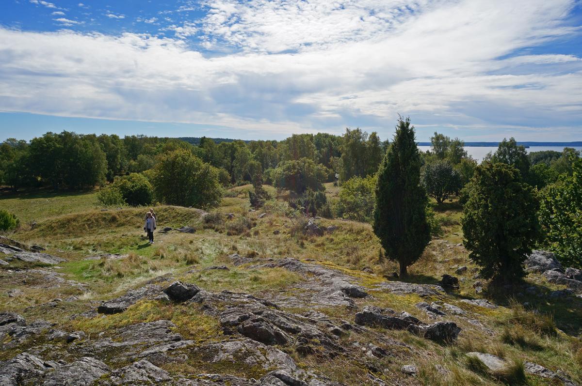 Photo: Vikingastaden Birka på Björkö. Adelsö socken, Ekerö kommun, Uppland. 20160830. Gravfält söder om fornborgen. © Sven Olsson (e-post: kosmografiska@gmail.com)