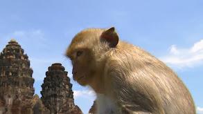 Monkey Trouble thumbnail