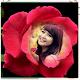 Rose Photo Frames (app)