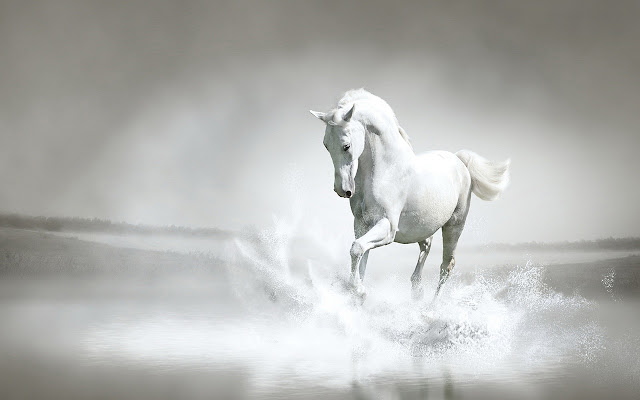 white horse by rb themes 1920x1080 chrome web store