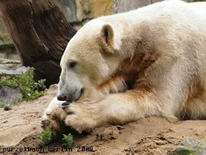 Photo: Knut hat die Ruhe weg ;-)