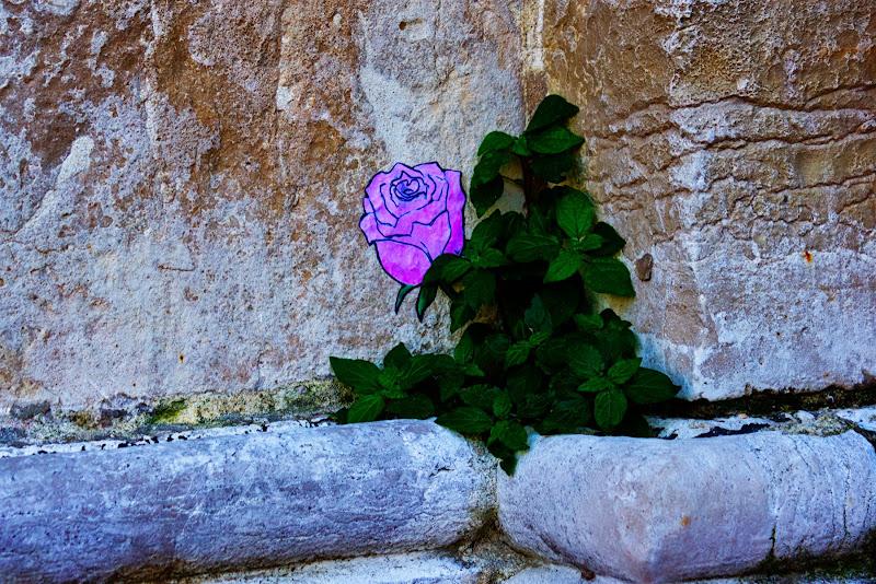 VE - Fiore di pietra di galubio52