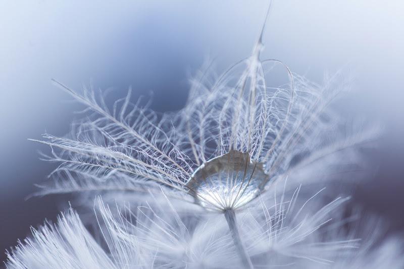 Photo: Purple snowflakes