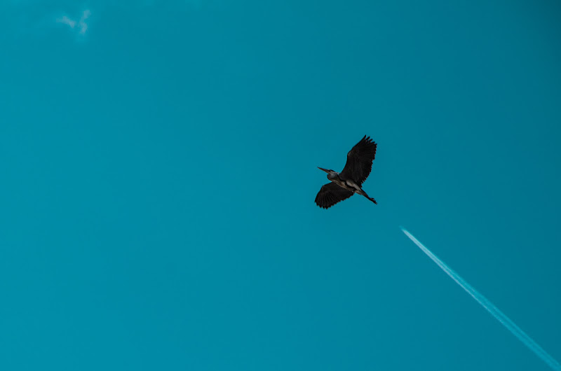 Air One di Giovanni Coste