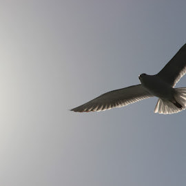 Fly me to tomorrow by Sourav Saha - Novices Only Wildlife ( bird, wings )