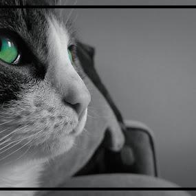 Aqua Cat by Mason Ablicki - Animals - Cats Portraits