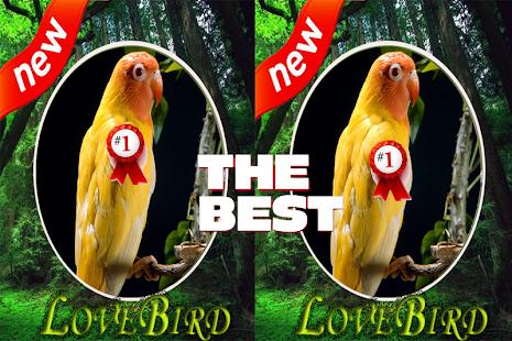 Burung Ocehan Lovebirds Mp3 - náhled