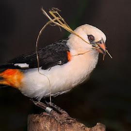 Le batisseur by Gérard CHATENET - Animals Birds