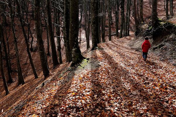 autunno in rosso ...... di faranfaluca