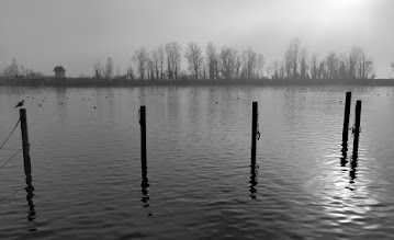 Photo: Rapperswil im Nebel