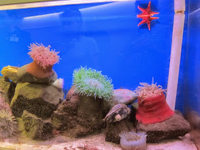 Photo: Fiero Marine Life Center in Port Angeles for more sea star and sea anemone touching.
