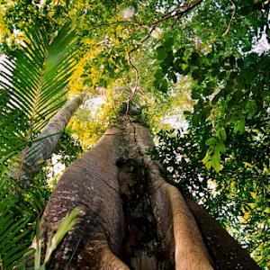 Rainforest Tree.jpg