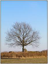 Photo: 24. februar 2011 - Månedens billede af træet