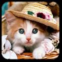 Katze Live-Hintergründe icon