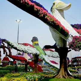 Freedom in Flowers by Nadeem M Siddiqui - City,  Street & Park  City Parks
