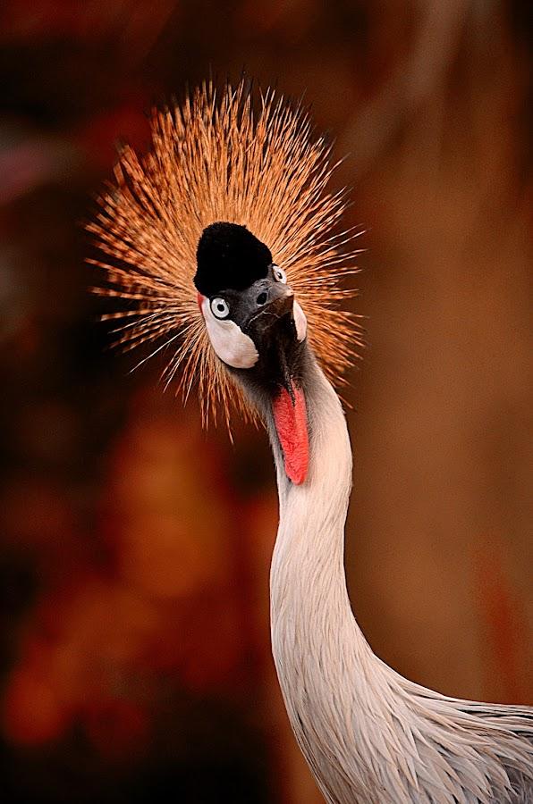 Hello by Ilman Kurniawan - Animals Birds