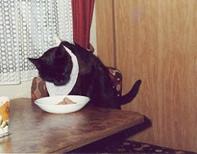 Photo: Le bavoir , il parait que je mange comme un cochon