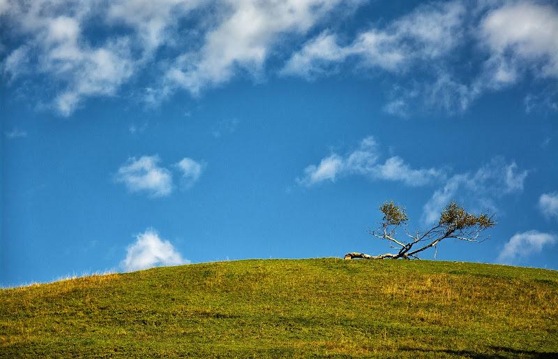 Solitudine di un piccolo albero di vaiolet