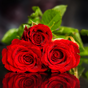 What a rose, such a thorn. by Morgentau ;) - Flowers Single Flower ( love, mirror, birth, gift, rosebud, lovers, red, valentines, beautiful, roses, reflections, flowers )