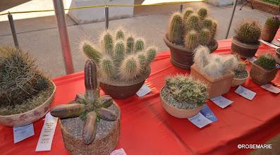 Photo: Echinocereus