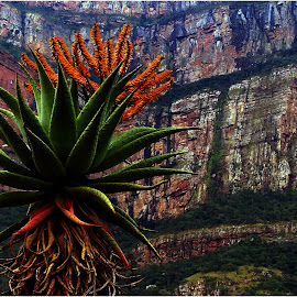 Swadini - South Africa by Marissa Enslin - Nature Up Close Other plants