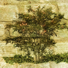 Tree on Stone by Edward Gold - Digital Art Things ( orange, digital photography, green grass, tree, stones, colorful, digital art,  )