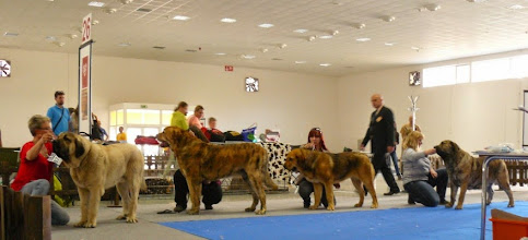 Photo: selection of Best of Breed