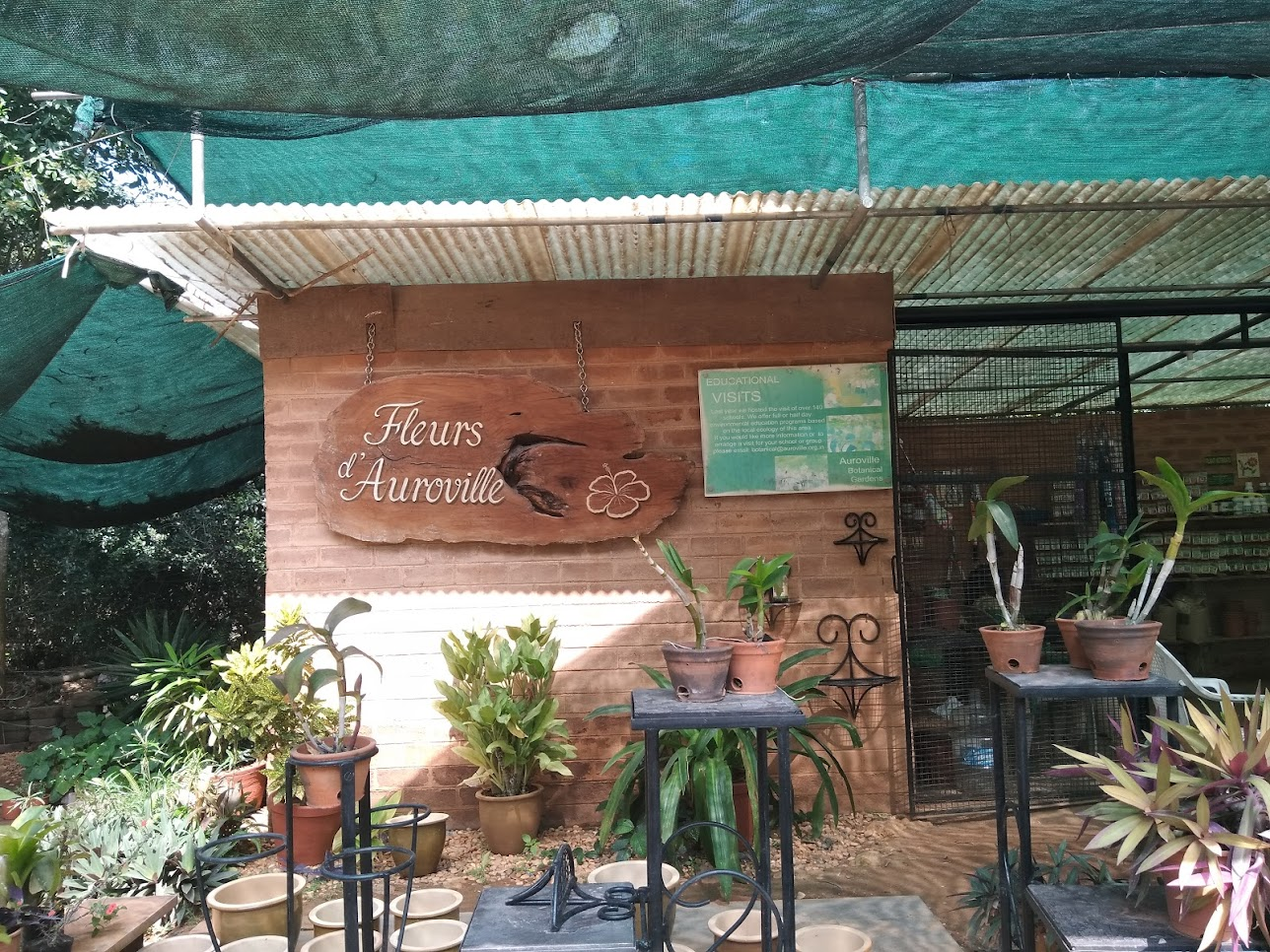 植物売り場