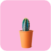 Cactus HD Wallpaper