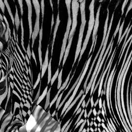 Camouflage by Chris Seaton - Digital Art Animals ( zebra, digital, art, camouflage, black and white )