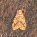Footman Moth