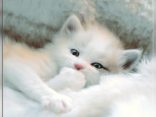 Cute Animal Wallpapers