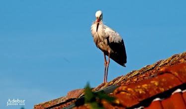 Photo: auf dem Dach sitzt ein Adebar