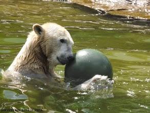 Photo: Tosca hat nun den Ball :-)