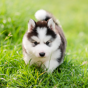 Cute Puppies Live Wallpaper‏