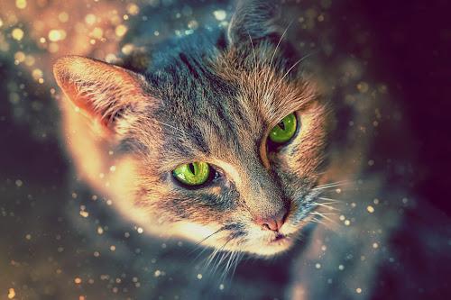 My Casey by Robert Mullen - Digital Art Animals ( cat, housecat, green eyes, feline, domestic, domestic cat,  )