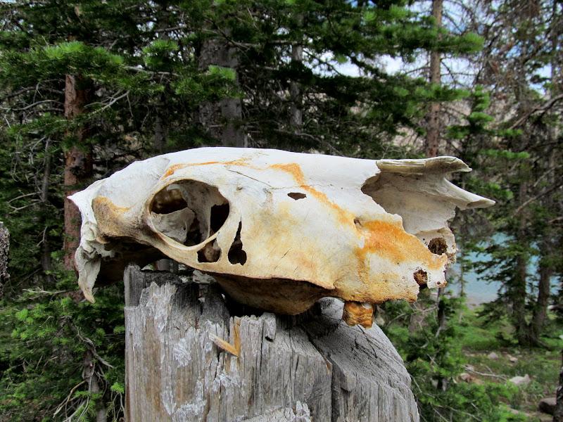 Photo: Horse skull?