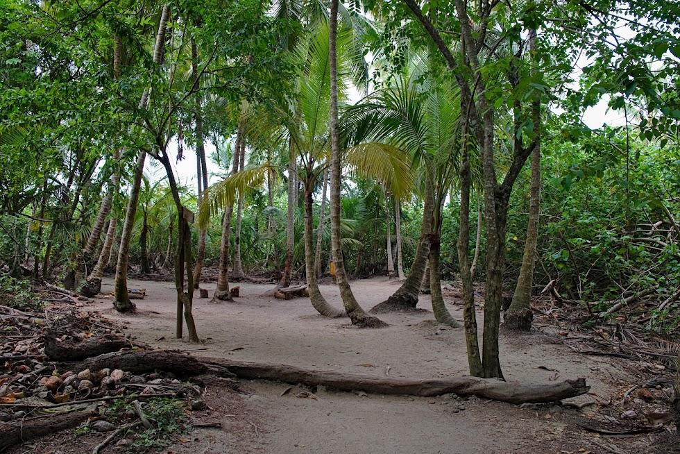 Palmy, park tayrona