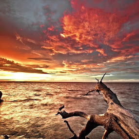 Last Result by Md Arif - Landscapes Waterscapes
