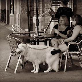 Friends by Robin Camp - People Street & Candids ( wine, friends, pet, cafe, dog, women )