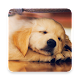 Golden Retriever Dog Wallpaper for PC-Windows 7,8,10 and Mac