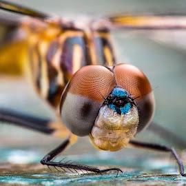 by Scott Schumacher - Animals Insects & Spiders