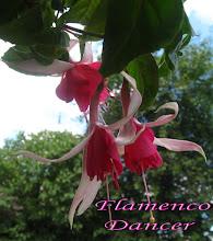 Photo: Flamenco  Dancer