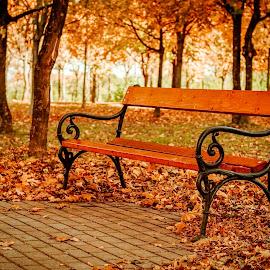 by László Szammelcsik - City,  Street & Park  City Parks