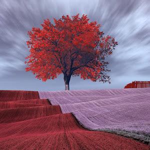 warmblanketonature_red_tree.jpg