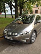 Photo: Kulkukissa makoilee röyhkeästi auton päällä.
