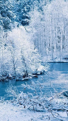 android Winter forest.Nature wallpaper Screenshot 0