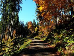 Photo: Z Borów Orawskich zjeżdżamy żółtym i szutrówkami oraz czarnym szlakiem wracamy na Rysiankę.