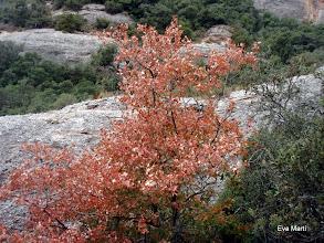Photo: Colors de tardor.