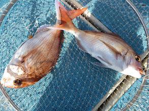 Photo: おおーっ!真鯛ダブルキャッチ!